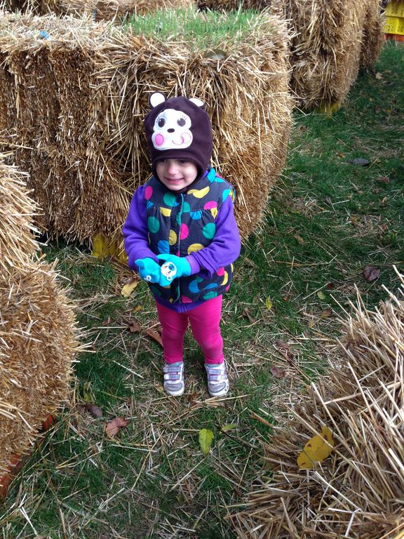 casa larga pumpkin maze
